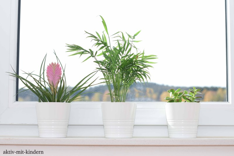 die 10 besten zimmerpflanzen pflegeleicht und f r. Black Bedroom Furniture Sets. Home Design Ideas