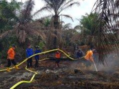 Tim gabungan BPBD Pasaman Barat berupaya memadamkan api di lahan plasma Kelapa Batang Alin Permai, Jorong Lubuk Juangan, Nagari Sungai Aur, Kecamatan Sungai Aur, Sabtu (29/2/2020).