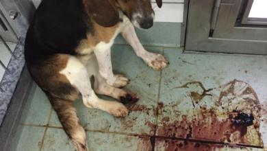 Photo of Soko-Tierschutz schleuste Undercover-Mitarbeiter ein