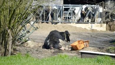 Photo of Skandalöse Zustände in der Nutztierhaltung