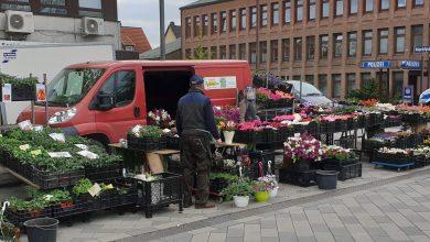 Photo of Blütenalarm auf dem Wochenmarkt Neugraben