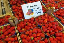 Bild von Altländer Erdbeeren suchen süße Partnerschaft