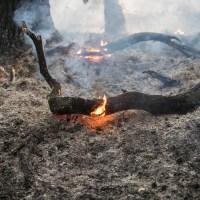 Waldbrände halten Feuerwehr in Hamburgs Süden in Atem