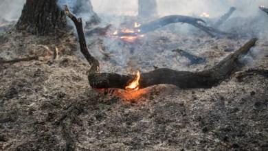 Photo of Waldbrände halten Feuerwehr in Hamburgs Süden in Atem