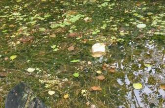 Photo of Kirschen essen & Kanu fahren im BUND-Naturerlebnisgarten