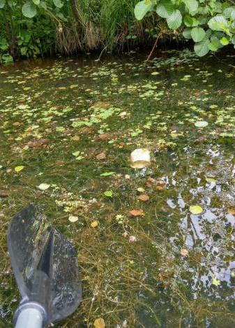 Bild von Kirschen essen & Kanu fahren im BUND-Naturerlebnisgarten