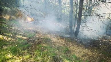 Bild von Bahnböschung brannte in Stelle – Drei Feuerwehren löschten das Feuer