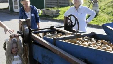 """Bild von """"Kartoffeltag – Spezial 2020"""" mit großer Sortenvielfalt"""
