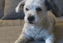 """Bild von Johanniter bieten Praxiskurs für """"Erste Hilfe am Hund"""" an"""