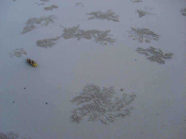 Kum Toplayan Yengeç Sanatı