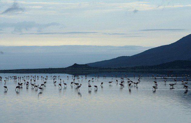 Natron Gölü - Chris Minihane