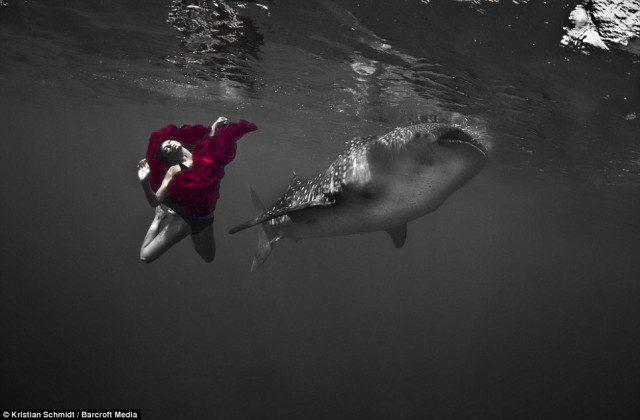 balina-kopekbaligi-11