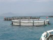 Deniz Kafesi