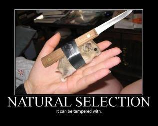 Natural Selection (Motivator)
