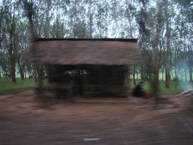 Saung penjaga hutan karet di Cimarga