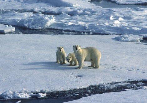 polar-bears-climate-change-schools