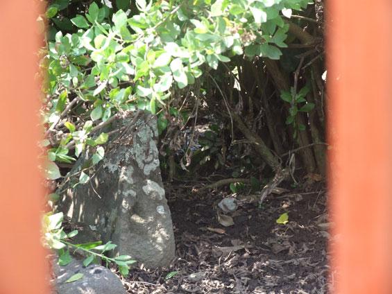 Salah satu batu di Cagar Budaya Batu Nan Tujuah