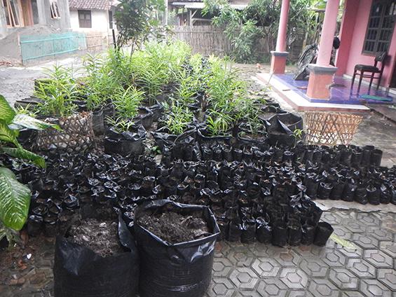 Stok jahe yang akan siap dibagi-bagikan ke warga untuk ditanam.