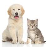 ペット介護士 動物病院・ペットショップなどペット業界への就業や、独立に
