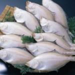 島根県大田市沖で獲れ、前浜で水揚げされたえてかれいのうち、旬を迎え肉厚で最も脂がのる