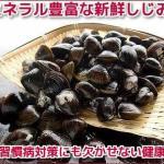 北海道産の新鮮なしじみ。しじみは、冷凍することで旨味・栄養価が倍増