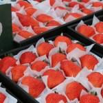 あまおう含む10品種の苺の中からそのときの美味しい苺をお届けします。
