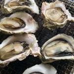 島根県の離島、隠岐知夫里島。手塩にかけた美味しい岩牡蠣 7,020 円