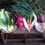 自然栽培野菜Mセット7~9種類・一品ごとに梱包して紙ひもで縛っている