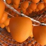 「あんぽ柿」の伝統を引き継ぎつつ、農薬や肥料を一切使用しない「自然栽培」