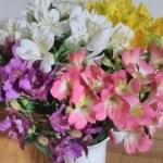 1本にたくさんの花が咲く! アルストロメリアの花束(15本程度)