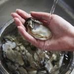 【順次発送】生で安心して食べられる 美浄生牡蠣 むき身 500g