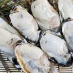 生食用 剥き身 牡蠣 宮城県松島産 500g×2本 カキ むき身