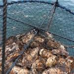 サロマ湖の牡蠣は濃厚 厳寒期だからウマイ❗殻付き牡蠣5kg  ¥4,000(税込 / 送料別)