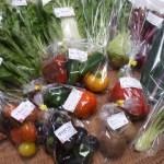 【1~3月限定!!】冬のうまさの極みミディトマトと生サラダ菜【10品目】