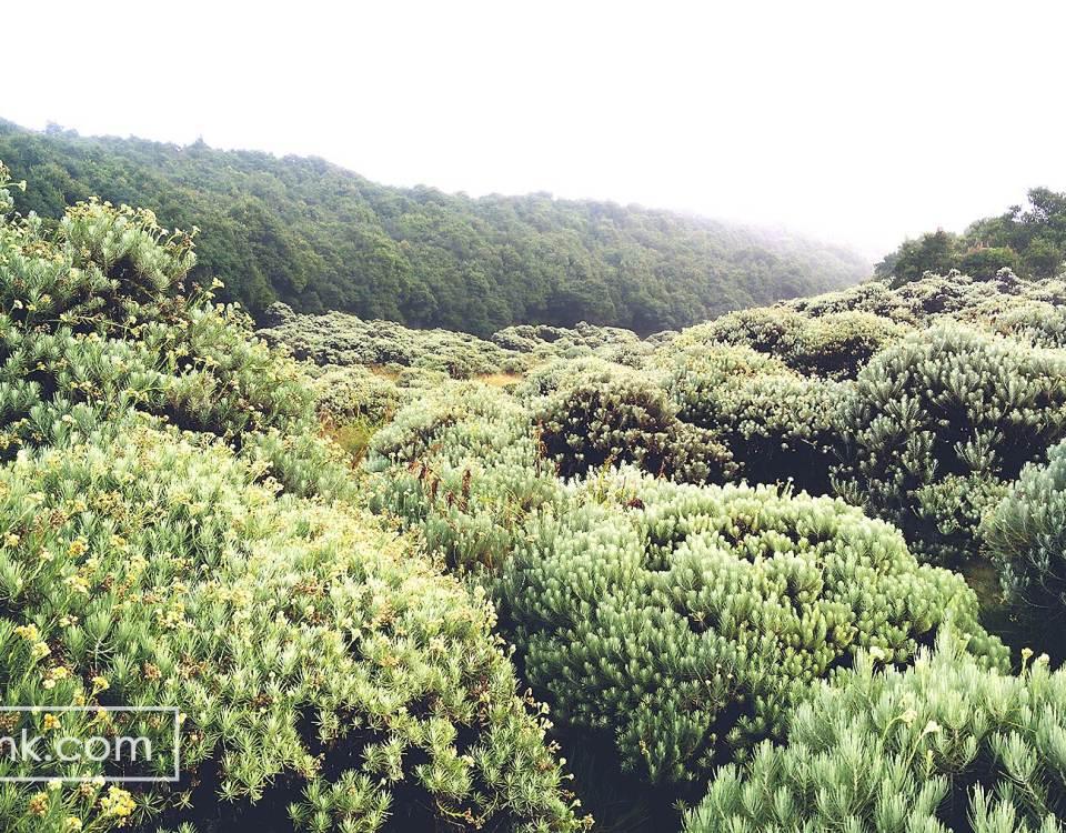 Tegal Alun Gunung Papandayan