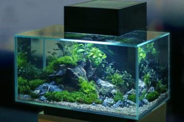 Выбор аквариума,аквариум с встроенной системой очистки и фильтрации.