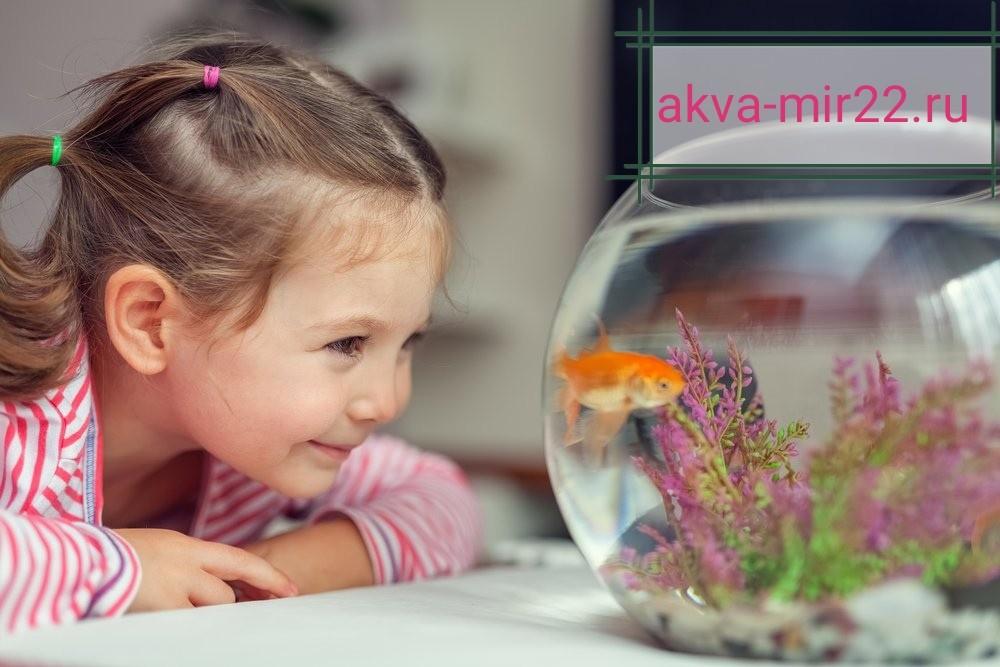 Девочка смотрит на круглый аквариум, а в нём плавает золотая рыбка