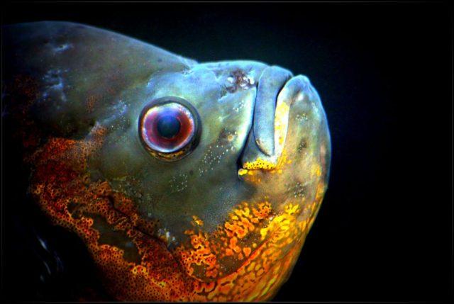 Tipy ako fotografovať akvárium