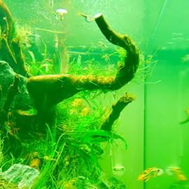 Zelená voda Zdroj: greenaqua.hu