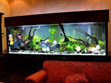 fish-tank-1
