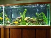 Дизайн аквариума 4