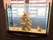 presnovodnyy-akvarium (16)