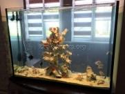 presnovodnyy-akvarium (17)