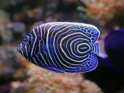 reef-fish-6