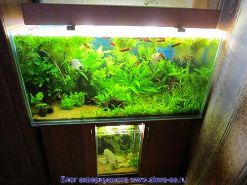 あなた自身の手を持つ水族館ランプ、オプション2