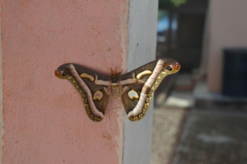 Foto af sommerfugl - Ghana. Af Karl Peter Holm