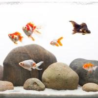 Jakie ryby łączyć razem? Dobieramy obsadę