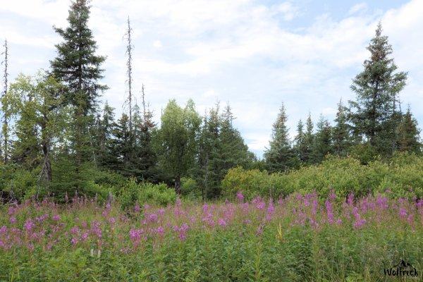 Alaskan Wildwood Ranch