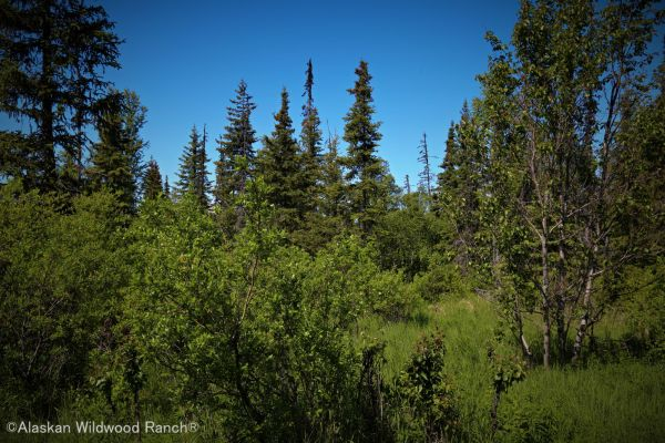 C16 Alaskan Wildwood Ranch®
