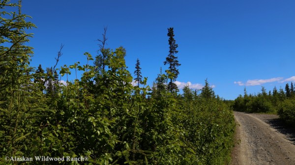 C4 Alaskan Wildwood Ranch®